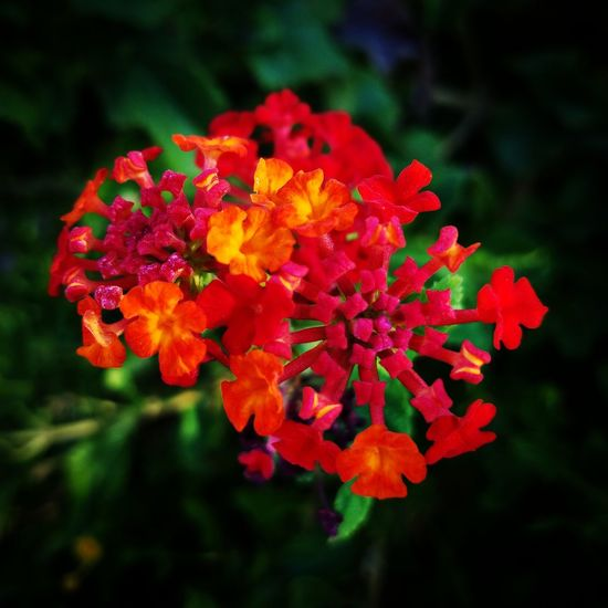 Colorful flower Flower Freshness Fragility Growth Petal Beauty In Nature Close-up Red In Bloom Nature Springtime Flower Head Selective Focus Vibrant Color Plant Blossom Botany Day Bunch Of Flowers Stamen