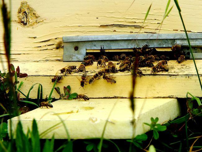 BeesYellow Animals NatureTaking Photos Hello World Open Edit EyeEm