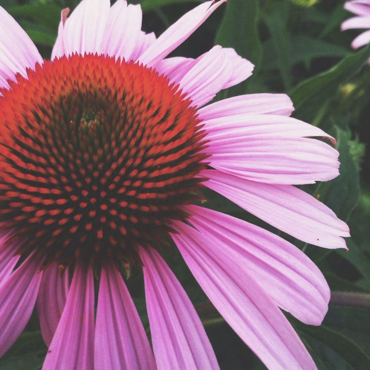 I found you. Flower Collection EyeEm Nature Lover EyeEm Flower