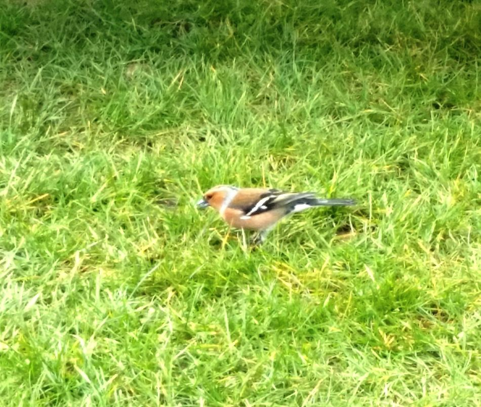 Goldfinch EyeEm Nature Lover Camping 😊