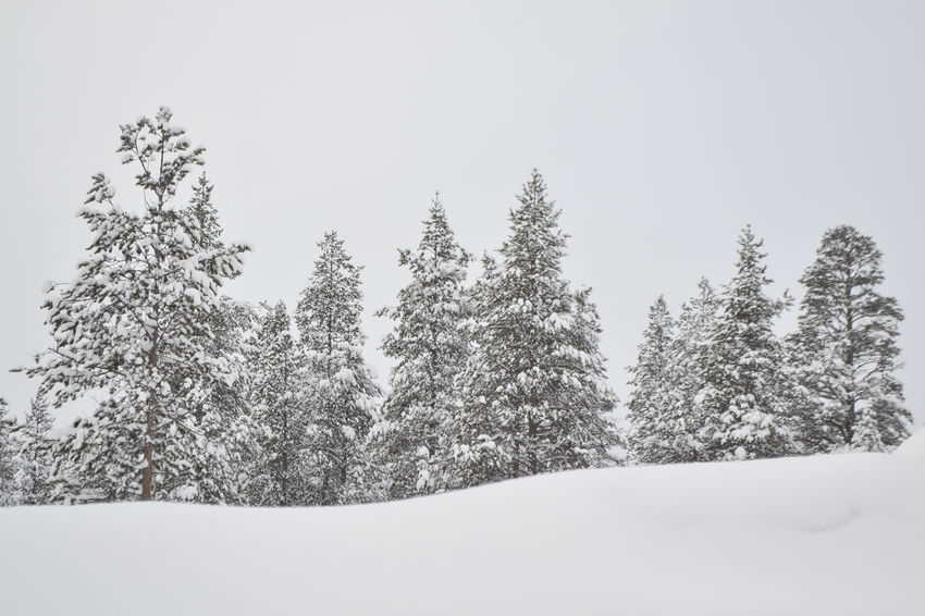 Wonderful winter landscapes of Lapland. Cold Cold Weather Day Finland Forest Frosty Hiking Landscape Lapland Mountain Nature No People Outdoors Pine Pine Forest Pine Tree Pine Woodland Reindeer Snow Snow Covered Tree Winter Winter Trees Winter Wonderland Wintertime