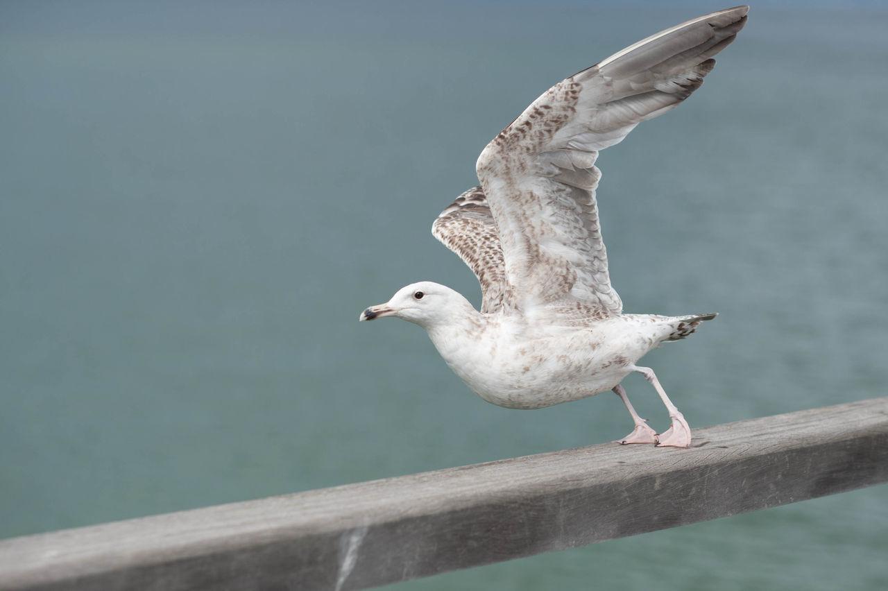 Beautiful stock photos of wings, Animal, Bird, Environment, Fauna