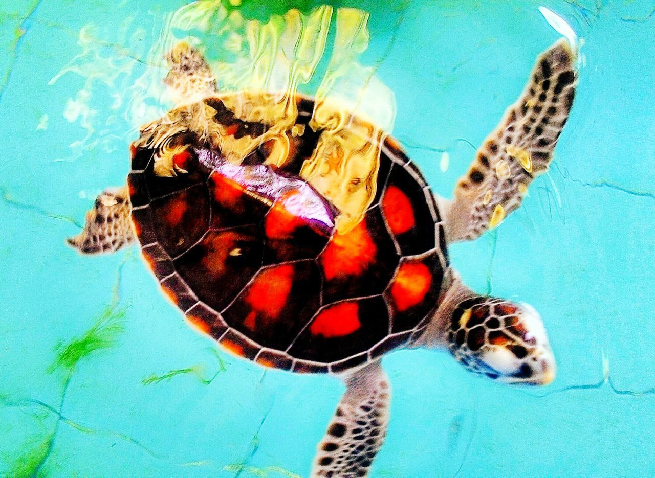 Baby turtles, It's a very pretty color.😍 Naturelovers Nature_collection EyeEm Nature Lover Eyeem Nice Shots Hello World FirstEyeEmPic First Eyeem Photo