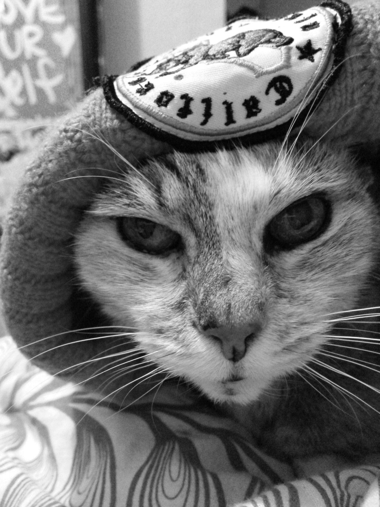 Kitty Gat Kittygato Cat♡ Kitty Cat Petco Petsmart Animal_collection Taking Photos Enjoying Life California Vatogato Freelance Life
