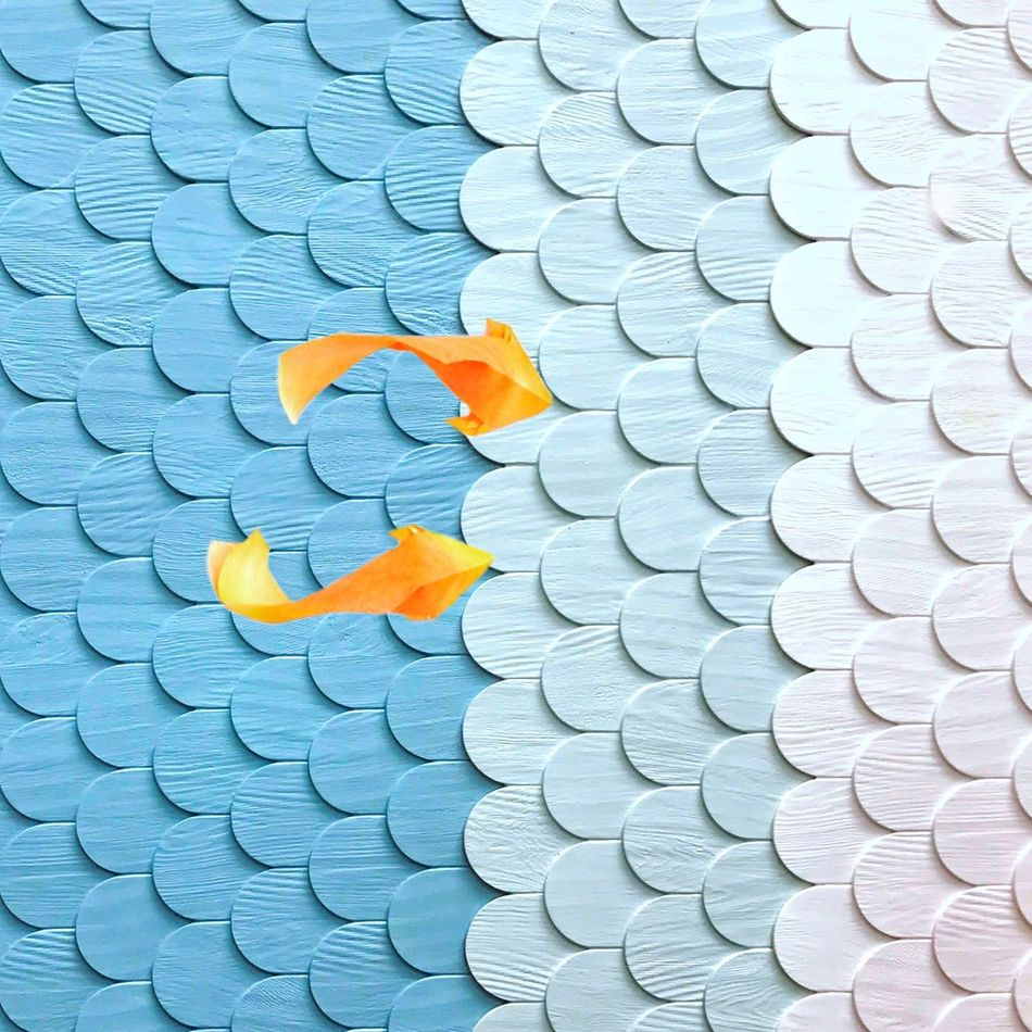 Swim upstream because downstream is too mainstream. Fish Blue