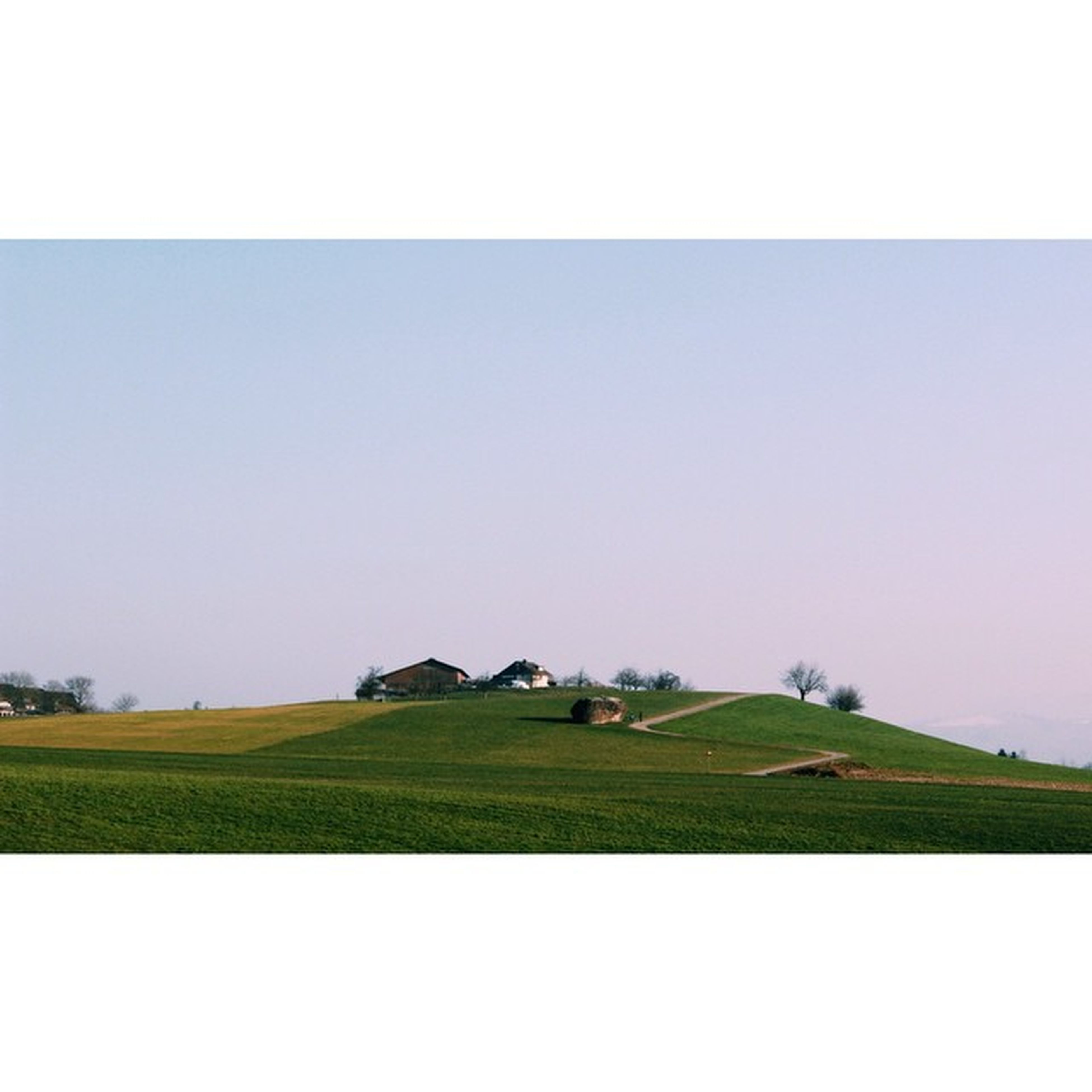 field, copy space, clear sky, landscape, rural scene, agriculture, grass, tranquil scene, tranquility, farm, scenics, beauty in nature, nature, green color, growth, grassy, crop, horizon over land, day, cultivated land