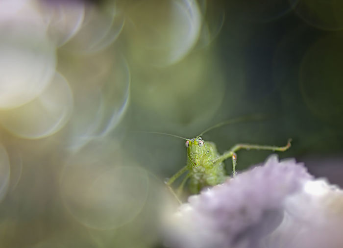 Grasshopper Plant Nature Fragility Spider Web Close-up Beauty In Nature No People Outdoors Day Trioplan Bokeh Photography Fortune Animal Wildlife Close Up