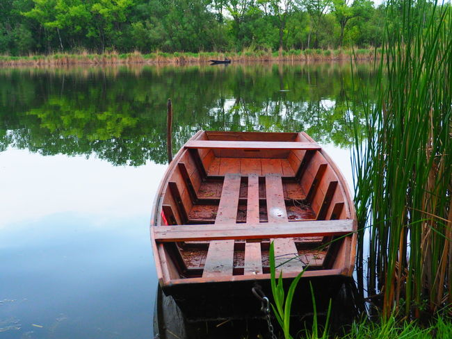 Beauty In Nature Boat Calm Danube Danube River Dead Danube Green Color Growth Idyllic Lake Nature Plant Poplar Poplar Flower Reed Reeds Reflection Riverside Riverside Photography Standing Water Tranquil Scene Tranquility Tree Water
