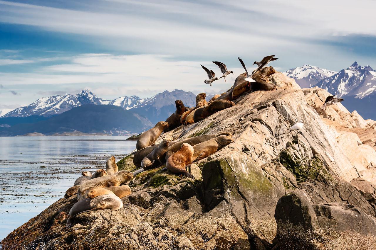 Sea lions and Albatros on isla in beagle channel near Ushuaia (Argentina) Albatros Animal Argentina Beagle Channel Birds Colony Land Of Fire Nature Patagonia Sea Lion Sea Lions Sealions Tierra Del Fuego Tierra Del Fuego Archipelago Ushuaïa