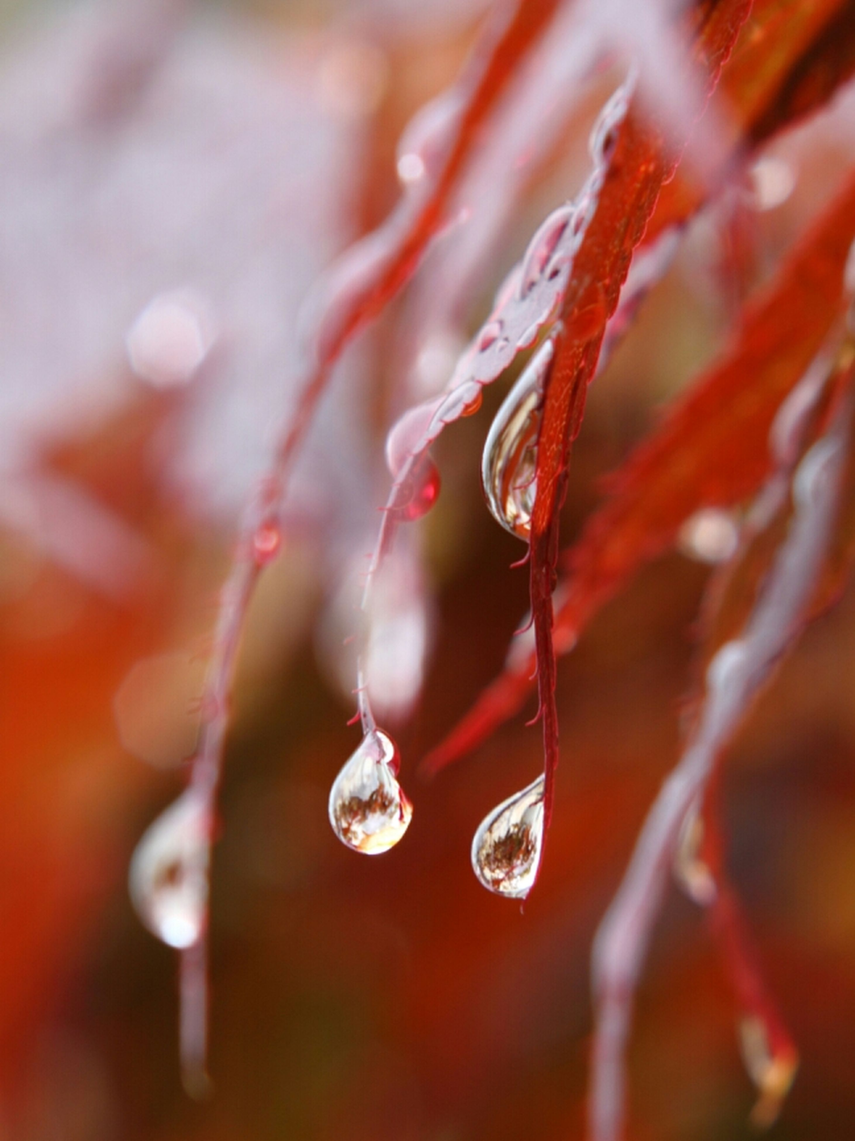 drop, water, close-up, wet, fragility, focus on foreground, selective focus, freshness, dew, nature, beauty in nature, growth, purity, plant, raindrop, rain, season, droplet, twig, detail