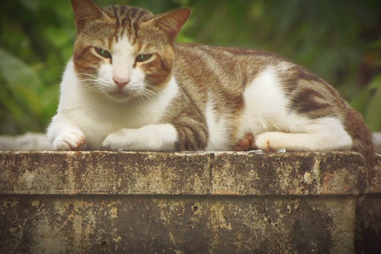Cat Photography Domestic Animals Pets Looking At Camera Disturbing Her Sleep Eyem Gallery No People, Outdoor Photography Animal World