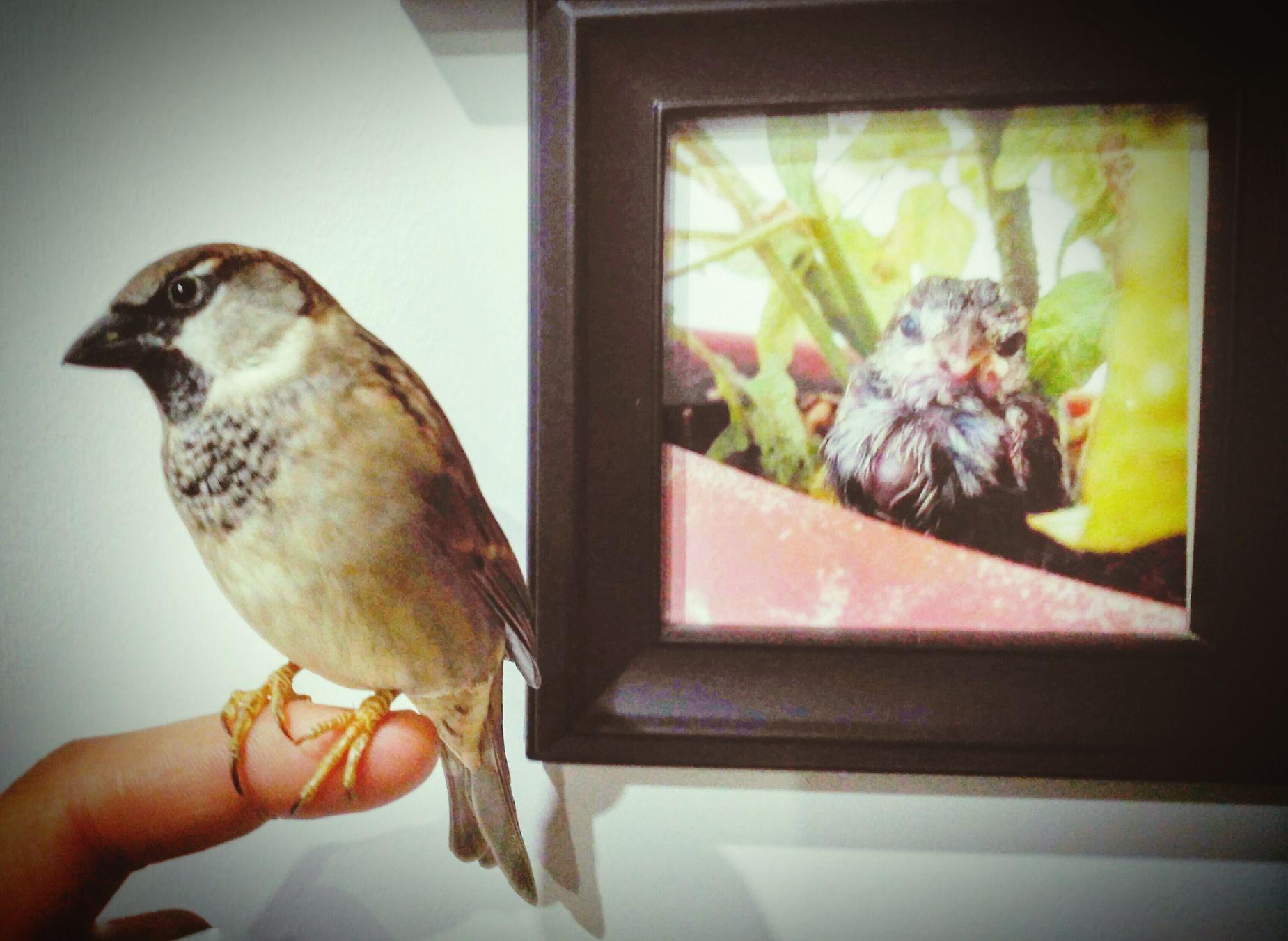 Easter Ready Gorrion Boki Bird Photography Birds_collection