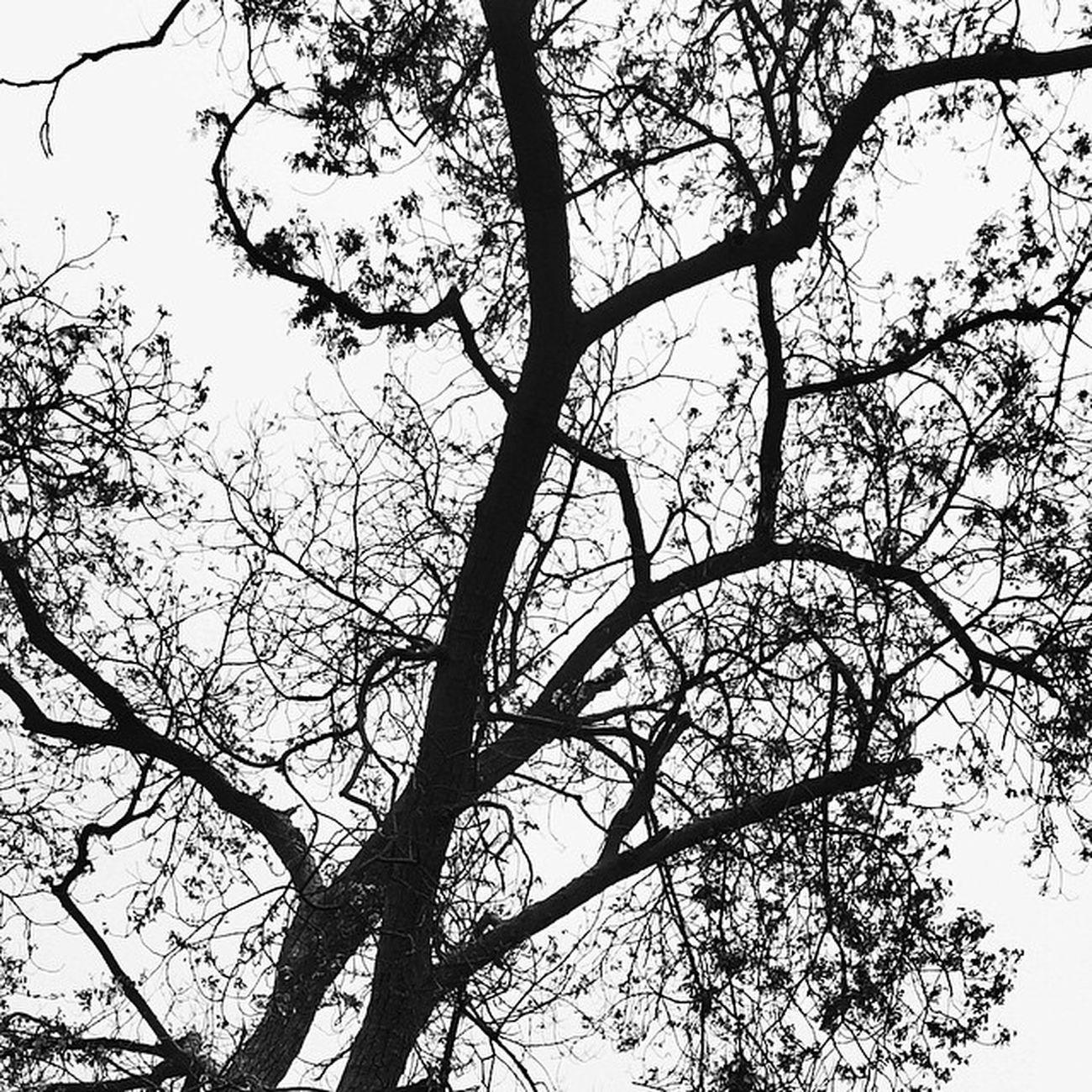 فرق كبير بين شخص اعجب بك وشخص أحبك الاول سيحدث الجميع عن جمالك .. والثاني سيقتل كل من سيتحدث عنك ... BLACK_ &_white Tree Nature Farmer_market Budaya Bahrain