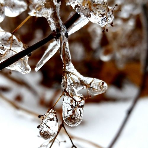 Ice Icedroplets Winter Newengland FrozenDrops Nature Deepfreeze