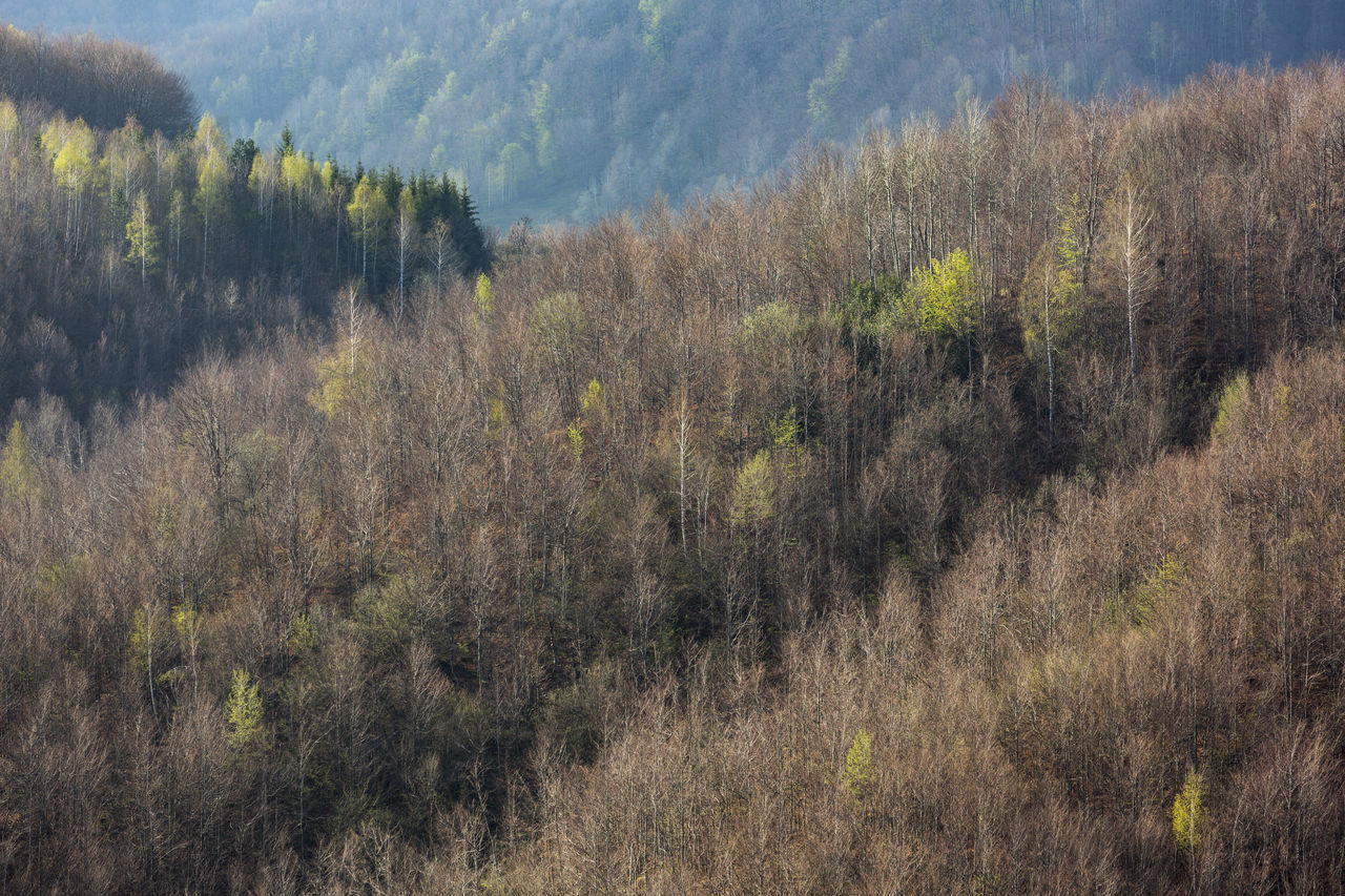 The Tara mountain, Serbia.