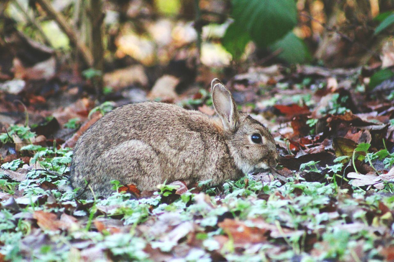 Animal Wildlife One Animal Close-up Grass Outdoors No People Nature Rabbit ❤️ Animal Themes Rabbit Face