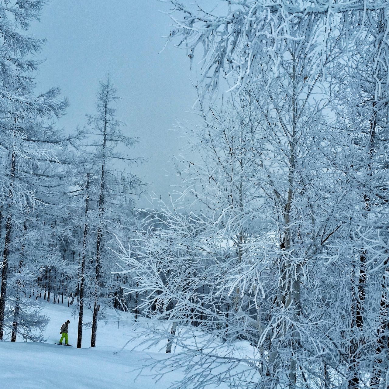 Tree Cold Temperature Nature Sky Snow Beauty In Nature Snowing Outdoors Day Snow Sports Snowboard Freeride Winter Forest Snow Trees No People Flock Of Birds Close-up