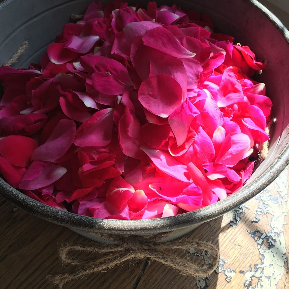 Bucket full of rose petals to be used in natural and organic products 🌿🌹🌿. Flower Petal Freshness Basket High Angle View Beauty In Nature Bowl Fragility Flower Head No People Nature Indoors  Close-up Rose Petals Day Bucket Harvest Pink Color Red Color