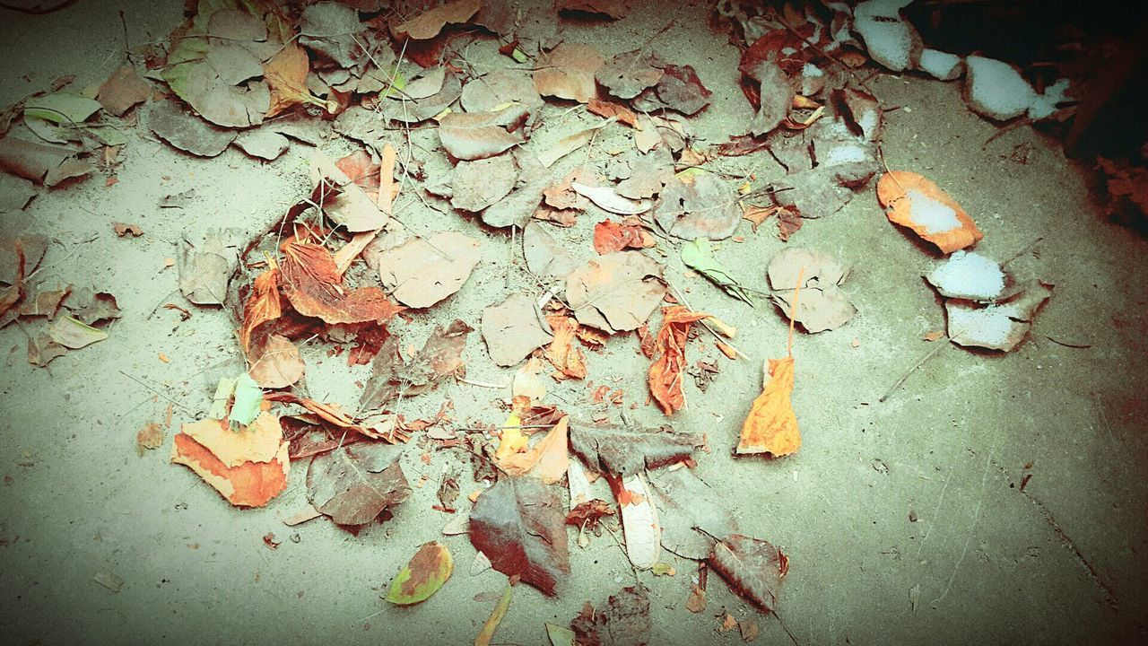 dry, leaf, autumn, no people, day, outdoors, nature, close-up