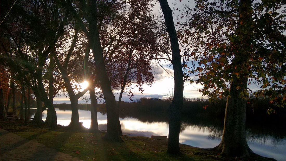 Tree Nature Sunset Beauty In Nature No People Reflection Sunlight Outdoors Sunbeam Sky Growth Sun Scenics Landscape Horizontal Tranquility Lake Tranquil Scene Water Grass