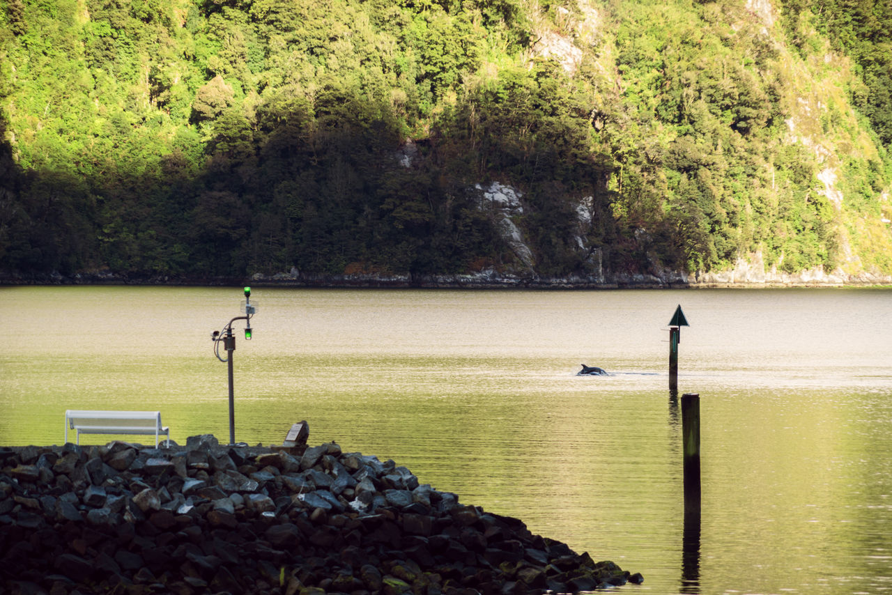 Beauty In Nature Day Fiordland Growth Milford Sound National Park Nature Nautical Vessel One Person Outdoors Pedal Boat People River Scenics Sport Tranquility Tree Water