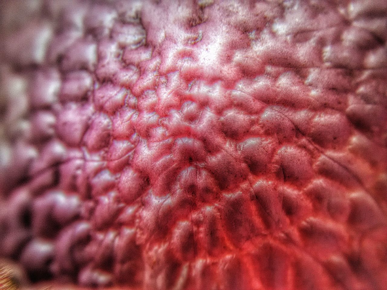 Lychee skin texture inside Backgrounds Better Look Twice Botany Close-up Design Detail Directly Above Dragon Skin Exotic Fruit EyeEm Macro EyeEm Nature Lover Focused Horizontal Ideas Lychee Skin Macro Photography Natural Pattern Pattern Pink Color Showcase: January Simplicity Softness Textured  Macro Beauty Pattern Pieces