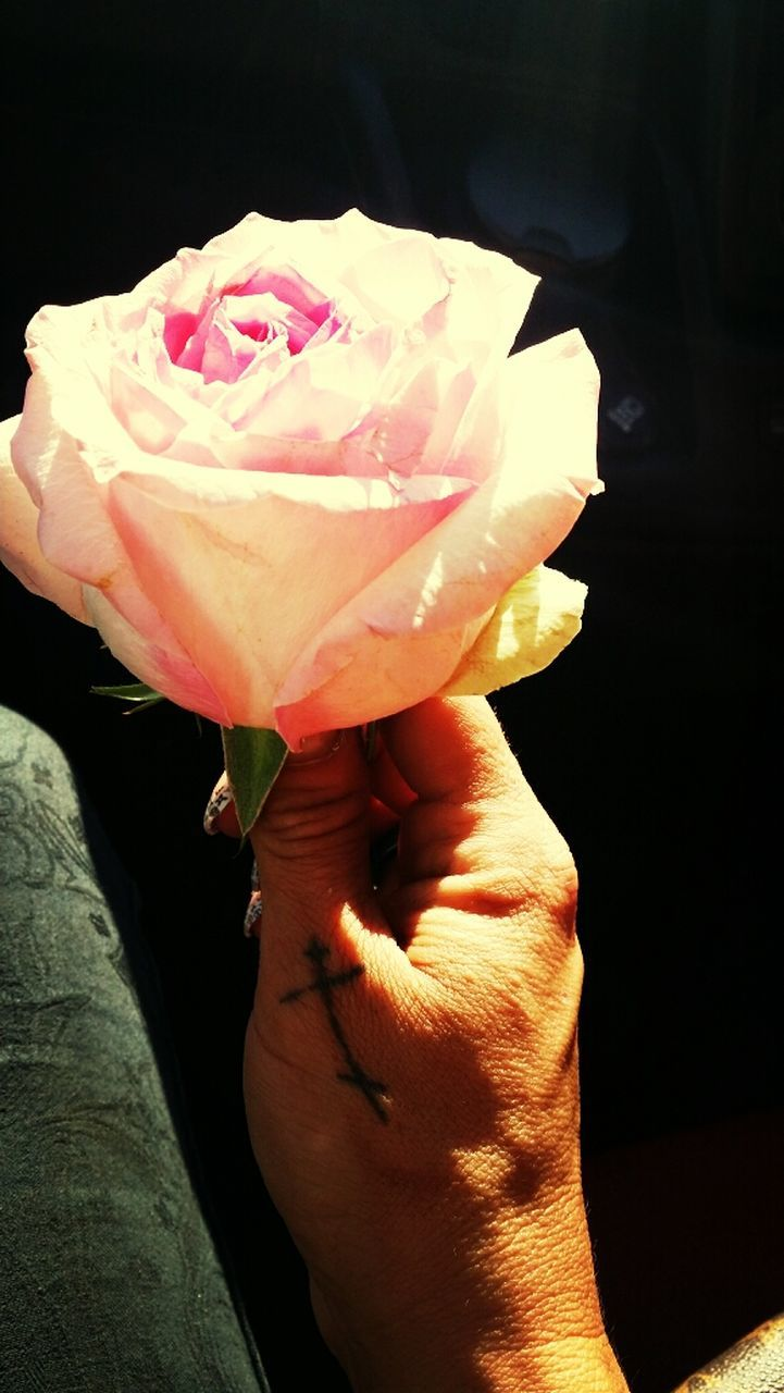 flower, petal, rose - flower, flower head, fragility, beauty in nature, nature, freshness, pink color, close-up, human hand, real people, day, one person, outdoors, people