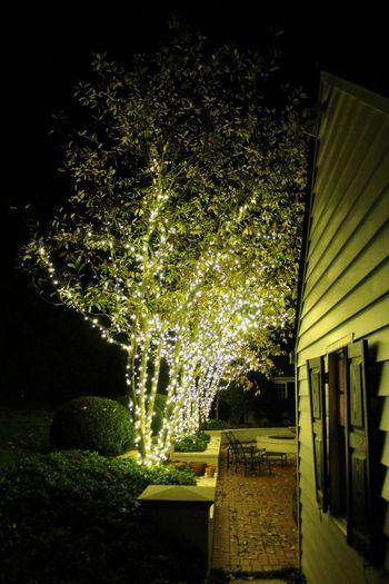 Illuminated Tree Night Outdoors Christmaslights Christmas Decorations Christmas Lights Christmas Decoration Christmas Lighting Christmas Lights!