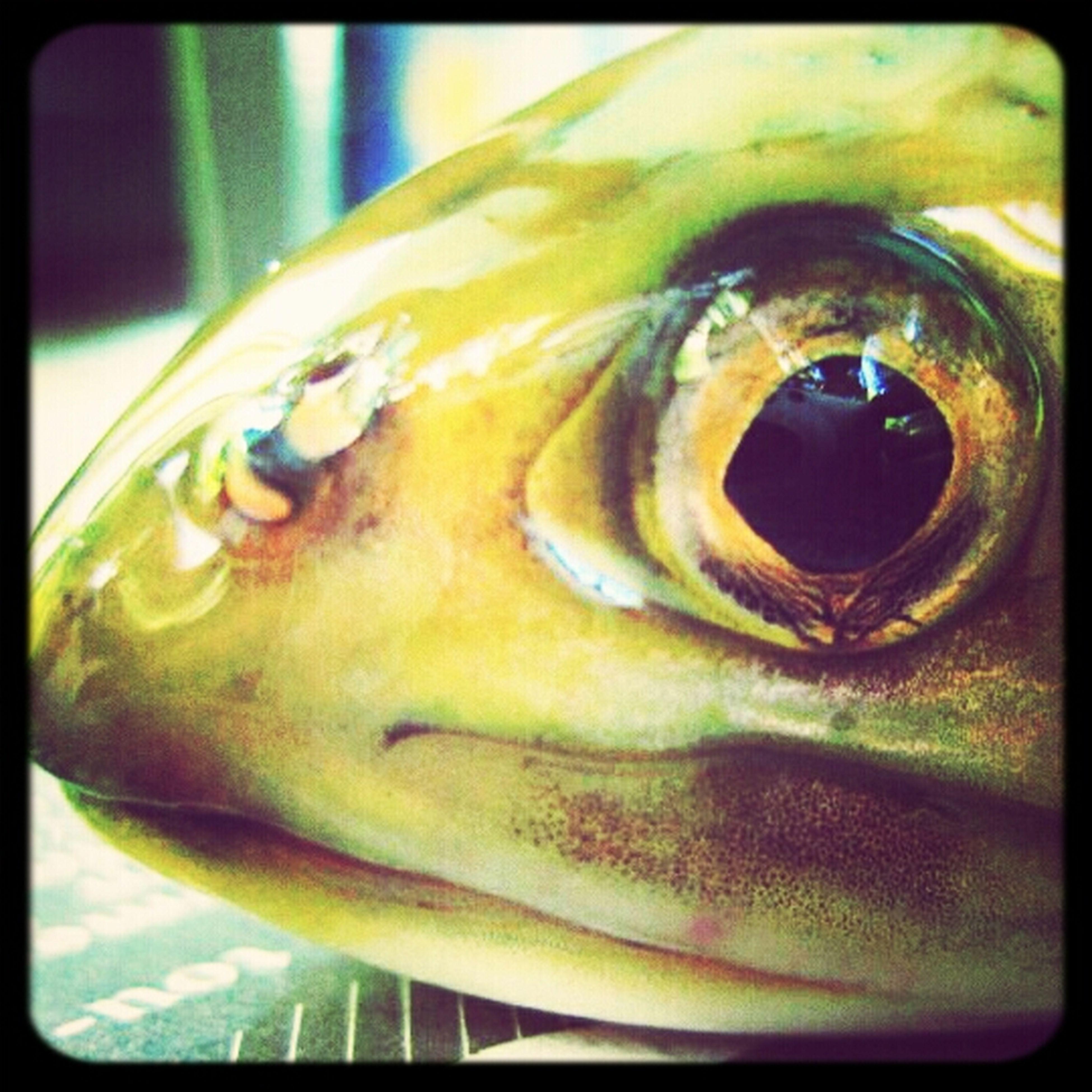 Fish Fisheye Ugly Fresh And Clean