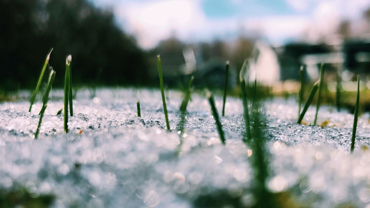 Grass fighting through the newly fallen snow. Selective Focus No People Nature Outdoors Day Close-up Water Beauty In Nature Sky Grass Snow Springtime April Weather April April Showcase Weather Weather Photography Neighborhood Map