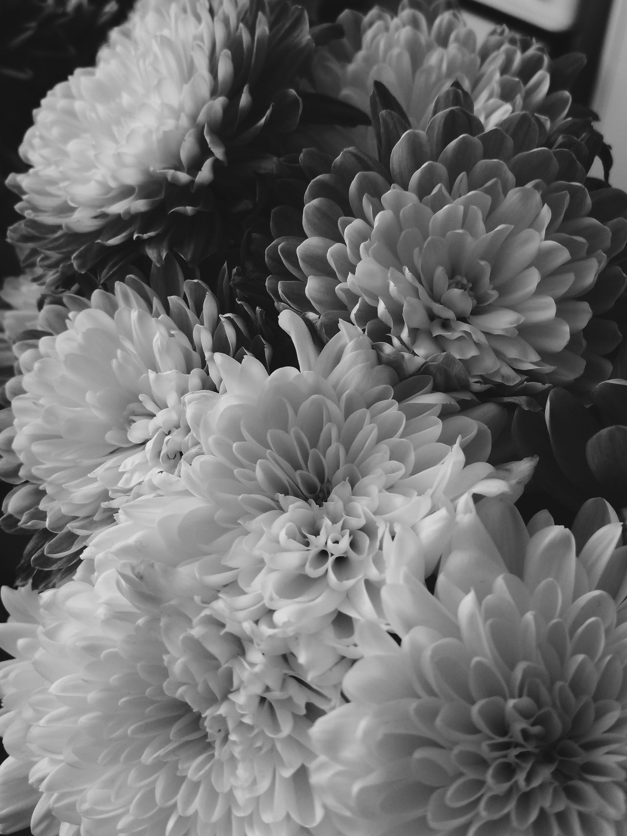 ⚫⚪ Flower Petal Nature Photography Monochrome Photography Blackandwhite Black And White Black & White