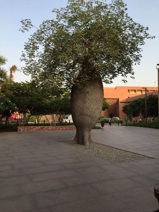 Diffrent Tree i shoked than i see ✌🏻