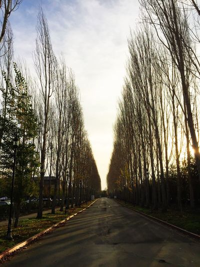 Bare Tree Beauty In Nature Cloud - Sky Country Road Diminishing Perspective Empty Empty Road Footpath Grass Growth Long Nature No People Outdoors Road Scenics Sky Sunset Surface Level The Way Forward Tranquil Scene Tranquility Tree Treelined Vanishing Point