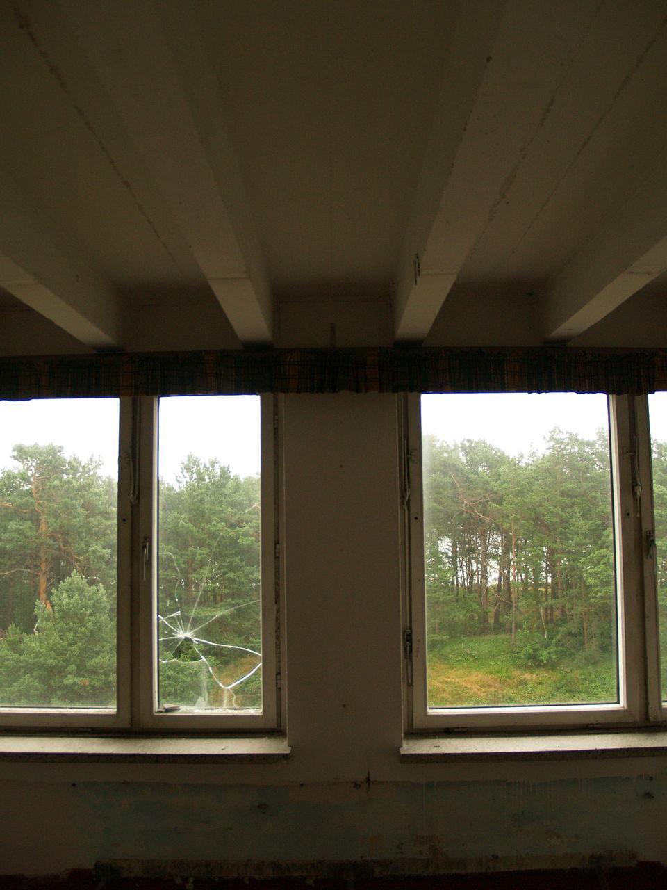 window, indoors, tree, architecture, day, no people, built structure, nature