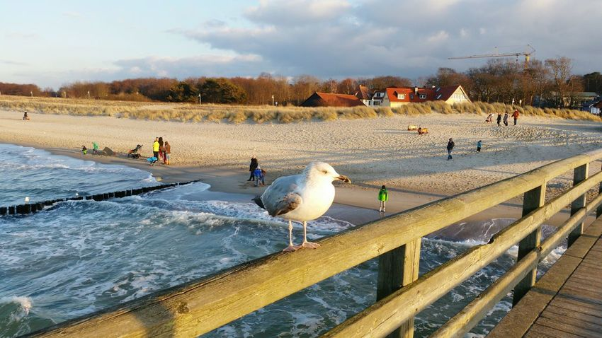 Nature Beach Animals Afternoon Baltic Sea Sunny Day