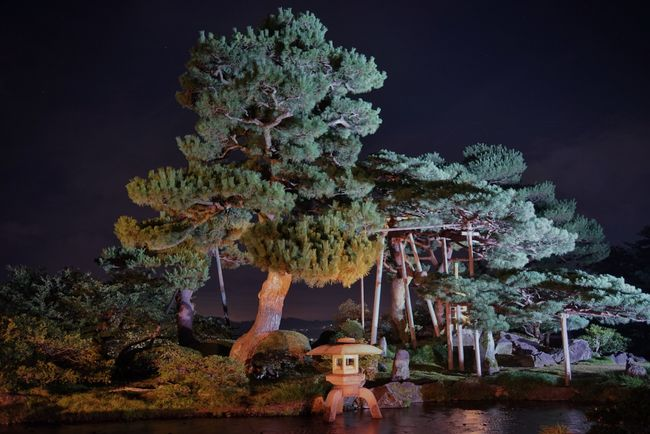 Japan Garden Kenrokuen Green Night Lights Light Beautiful
