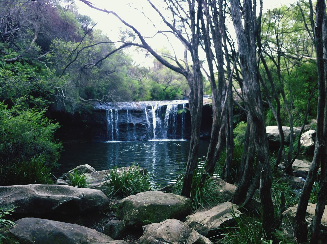 I am so lucky to have grown up in such beautiful countryside Nellies Glen Carrington Falls Southern Highlands Hidden Gems  Waterfall Serenity Bush Water Nature Nature_collection Nature Photography Australia