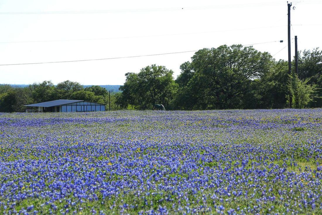 Texas Templetx Texas Bluebonnets Eyeforphotography