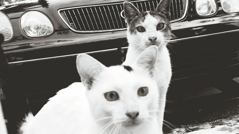 Puertorico Kanyn Catslover Cat♡ Cat Gato ? Amantedelosanimales Amantedelosgatos Animallovers