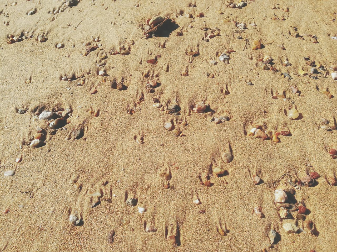 sand, beach, day, footprint, high angle view, outdoors, nature, no people, close-up, mammal