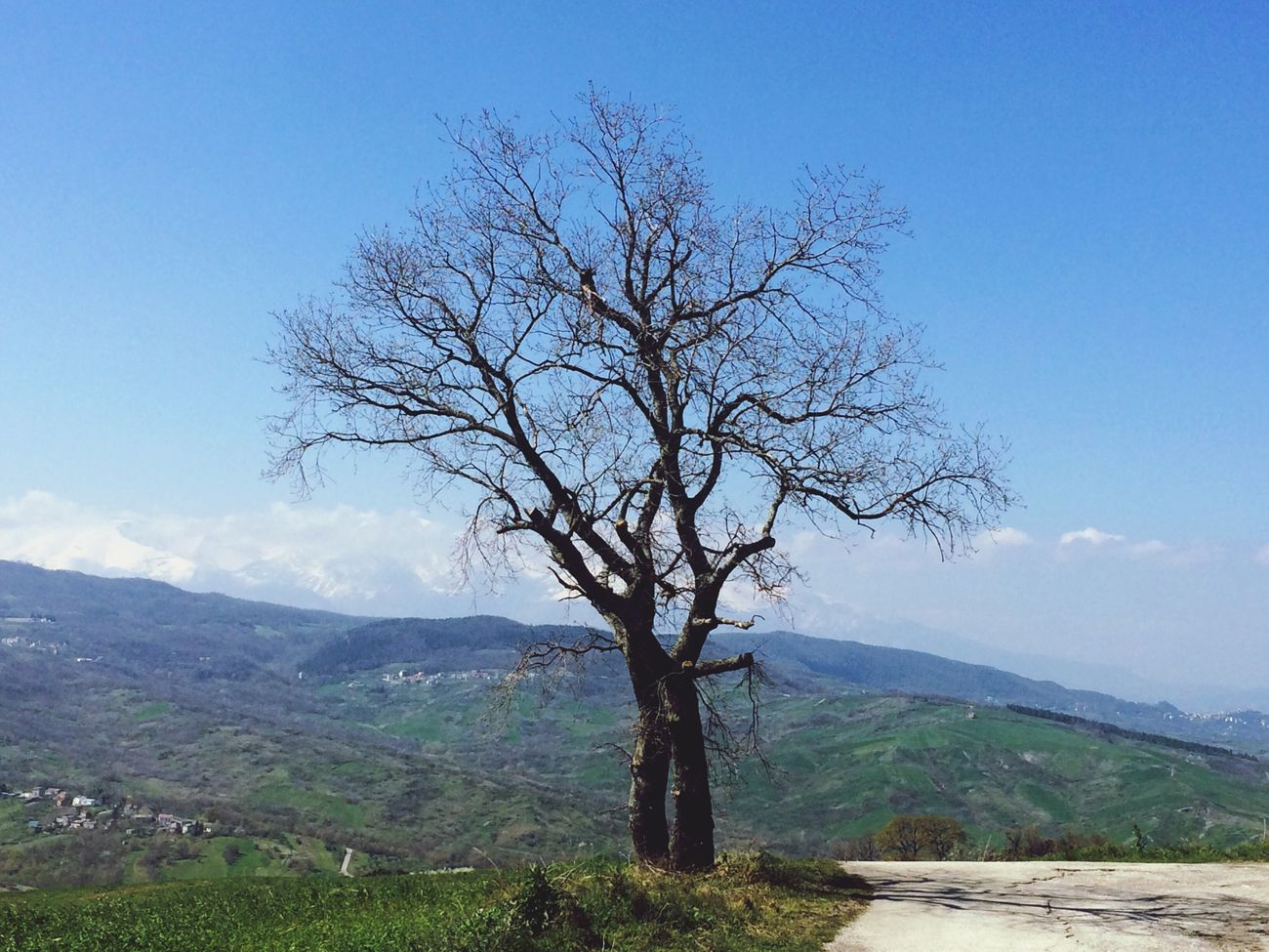 Nature Paesaggio Tree Special Photography Very Beautiful Spetacular Photographer Photo Art Beautiful Spectacle Meraviglia Fabolous