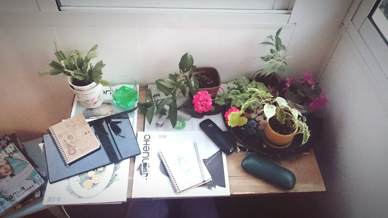 indoors, table, flower, high angle view, still life, potted plant, vase, freshness, variation, decoration, plant, wall - building feature, home interior, no people, arrangement, flower pot, leaf, tablecloth, growth, wood - material
