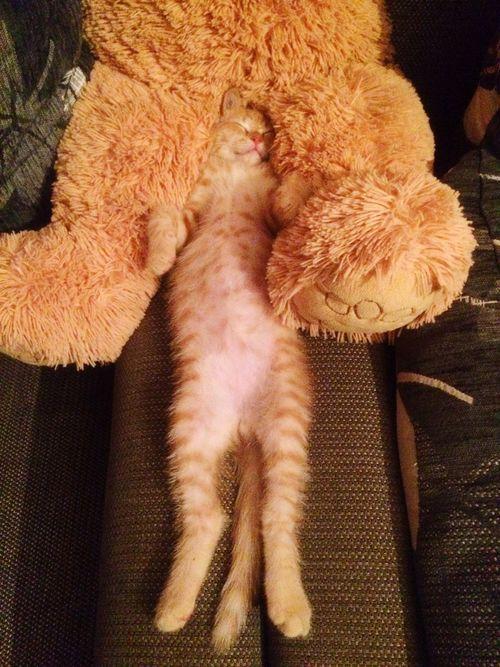 Котейка кот котэ Коты животные Hello World Cheese! Relaxing Enjoying Life устал рыжий кот тяжелыйдень красавица