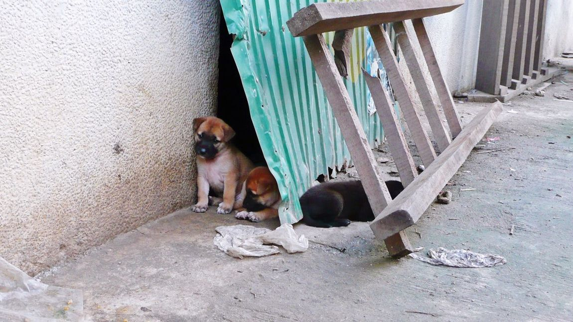 Puppies Dogs Dogslife Streetdogs Domestic Animals Mammal Animal Themes Dog Pets One Animal No People Day Architecture Outdoors