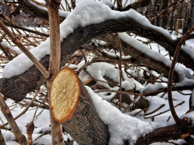 Snow Cold Temperature Winter Weather Frozen Nature Log Wood - Material Outdoors Field Forest Day No People Branch Beauty In Nature Tree Close-up EyeEmNewHere