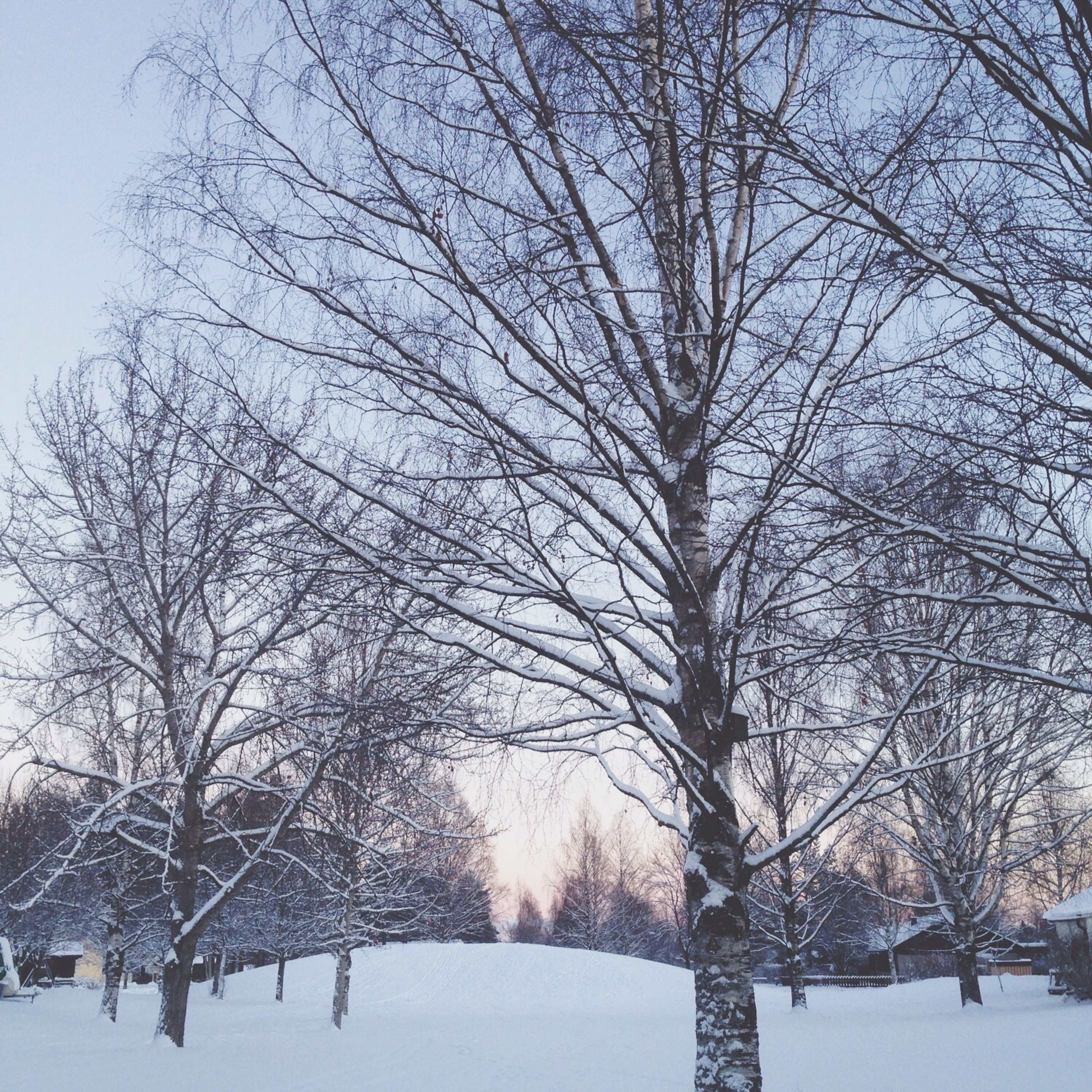 snow, winter, cold temperature, bare tree, tree, season, weather, covering, branch, tranquility, tranquil scene, nature, frozen, beauty in nature, scenics, landscape, field, covered, tree trunk, sky