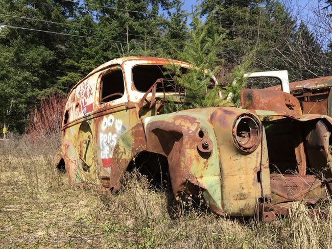 Found along an old rail line in Pemberton, BC. 1940's Abandoned Bad Condition Broken Car Damaged Deterioration Field Obsolete Old Pemberton Ruined Run-down Rural Scene Rusty Station Wagon Tree Vehicle Weathered