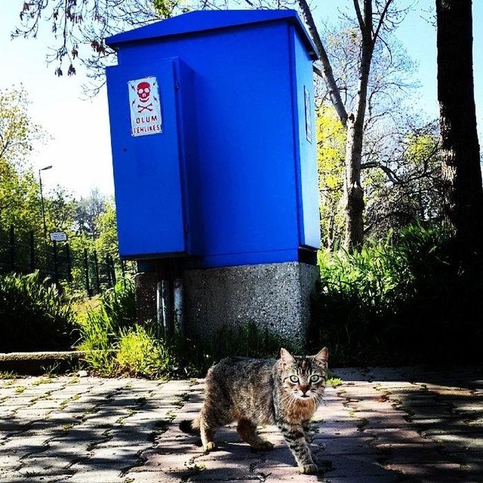 Trafo Kedi Miyav Birine bakıp çıktık bir şey mi var ?