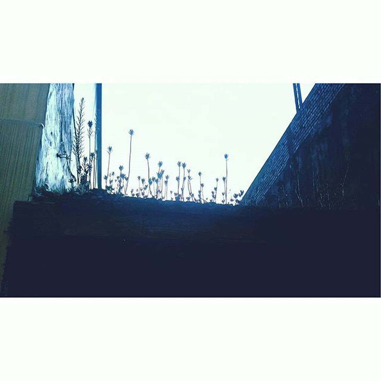 草 很高嘛 🌱 Grass Sunshin Roof Blue 屋頂 草 抬頭看