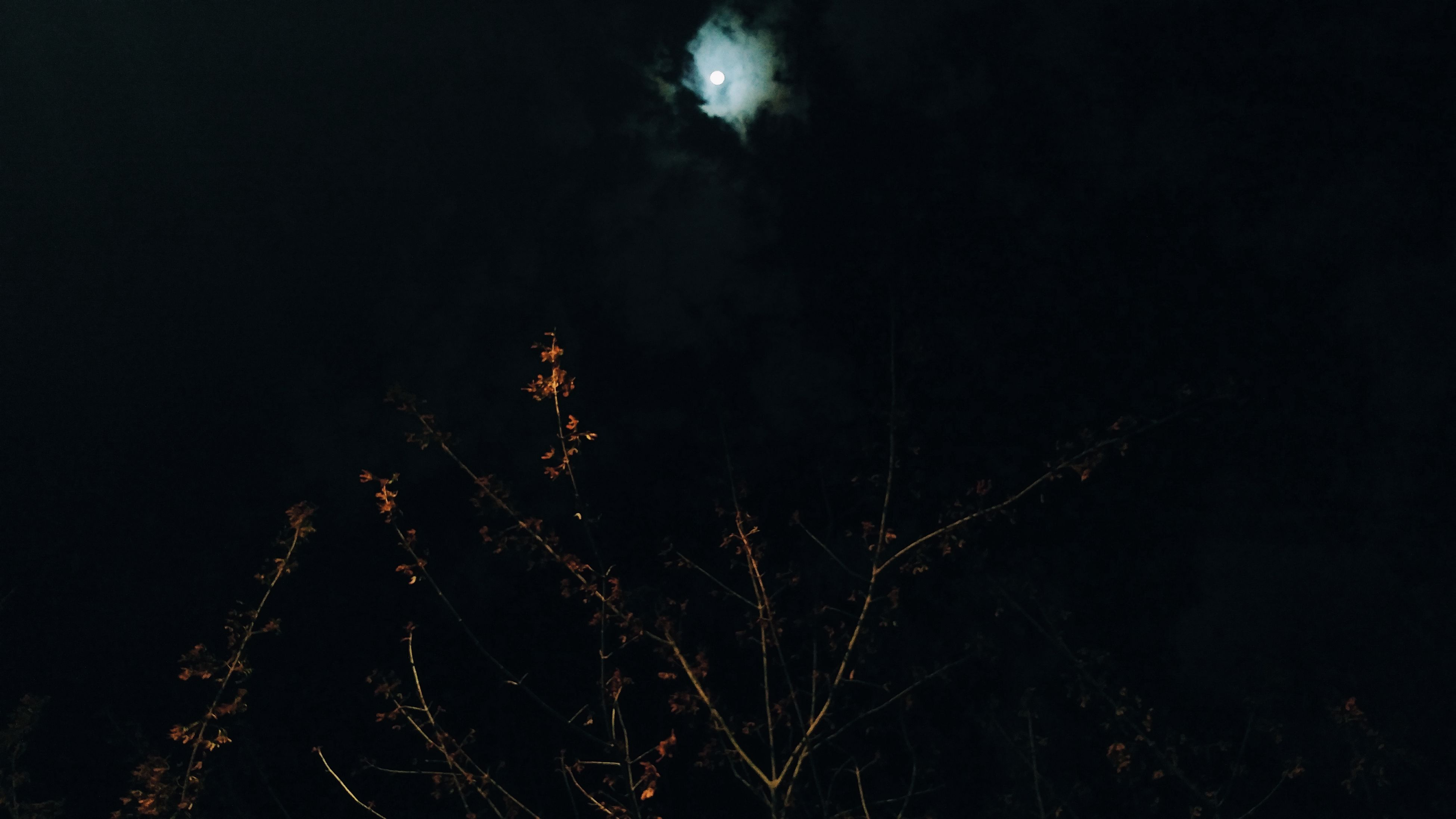 night, nature, no people, low angle view, outdoors, tranquility, beauty in nature, moon, tree, growth, sky, branch, black background, close-up, astronomy